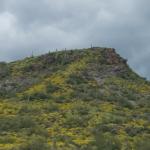 Desert Flowers - Mountain View